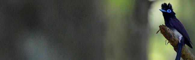 日本野鳥の会遠江支部